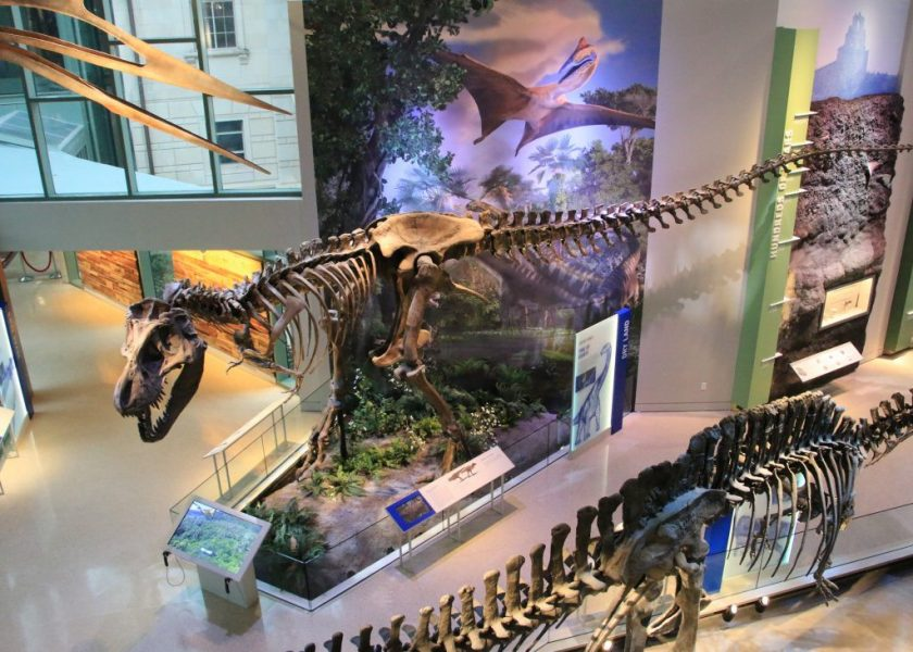 Witte Museum Naylor Family Dinosaur Gallery